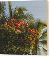 Bougainvilleas And Palm Trees Swaying In The Wind In Waikiki Honolulu Hawaii Wood Print