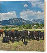 Boulder Beef Wood Print