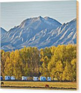 Boulder County Colorado Flatirons Autumn View Wood Print