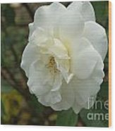 Bountiful White Rose... Wood Print