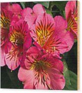 Bouquet Of Pink Lily Flowers Wood Print