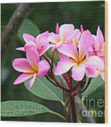 Bouquet Of Pink Plumeria Wood Print