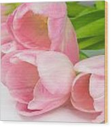Bouquet Of Pink Tulips. Wood Print
