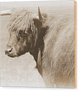 Bovine With Bangs Wood Print