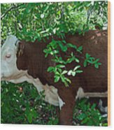 Bovine In The Shade Wood Print