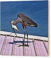 Bowing Blue Heron Wood Print