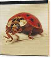 Bowing Ladybug . Art And Frame Print Only Wood Print by Walter Klockers