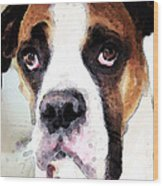 Boxer Art - Sad Eyes Wood Print by Sharon Cummings