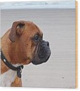 Boxer By The Sea Wood Print