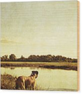 Boxer Dog By The Pond At Sunset Wood Print by Stephanie McDowell