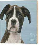 Boxer Dog, Close-up Of Head Wood Print by John Daniels