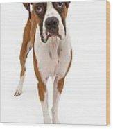 Boxer Dog Isolated On White Wood Print
