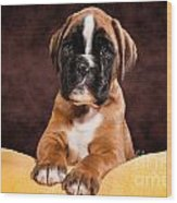 Boxer Dog Puppy Wood Print by Doreen Zorn