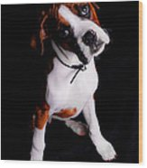 Boxer Pup Wood Print by Jt PhotoDesign
