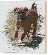 Boxer Puppy 14-1 Wood Print