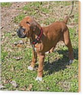 Boxer Puppy 2 Wood Print by Maria Urso