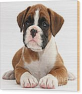 Boxer Puppy Wood Print by Mark Taylor