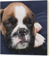 Boxer Puppy Sleeping Wood Print by Weston Westmoreland