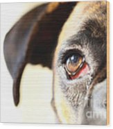 Boxer's Eye Wood Print