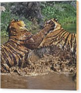 Boxing Bengal Tigers Wildlife Rescue Wood Print