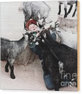 Boy Surrounded By Hungry Goats Wood Print
