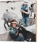 Boys Feeding Hungry Goats  Wood Print