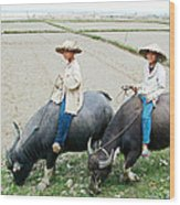 Boys On Water Buffalo In Countryside-vietnam Wood Print