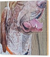 Bracco Italiano  Leo Wood Print