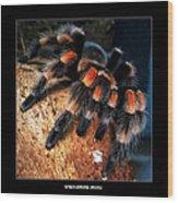 Brachypelma Smithi - Redknee Tarantula Wood Print