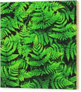 Bracken Ferns Wood Print