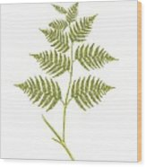 Bracken (pteridium Aquilinum), Artwork Wood Print