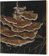 Bracket Fungus - Coltricia Wood Print