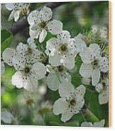 Bradford Pear Blooms Wood Print