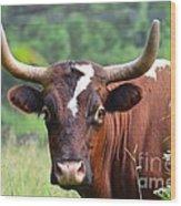 Braford Bull Wood Print