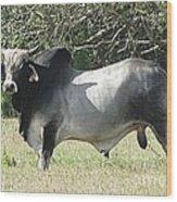 Brahama Bull Wood Print