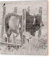 Brahman Bull Wood Print