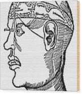 Brain Diagram, 1503 Wood Print