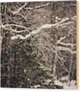 Branch In Forest In Winter Wood Print