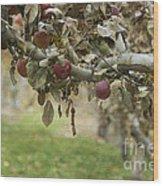 Branch Of An Apple Tree Wood Print by Juli Scalzi