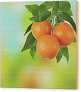 Branch Of Tangerines Wood Print