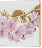 Branch With Cherry Blossoms Wood Print