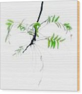 Branch With Green Leaves Wood Print