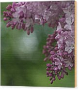 Branch With Spring Lilac Flowers Wood Print