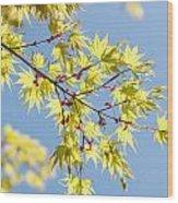 Branche In Springtime Wood Print