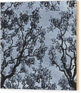 Branches Across Wood Print