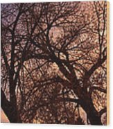 Branching Out At Sunset Wood Print