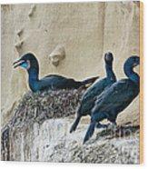 Brandts Cormorant Nesting On Cliff Wood Print