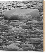 brash sea ice forming on the edge of open water winter closing in Antarctica Wood Print