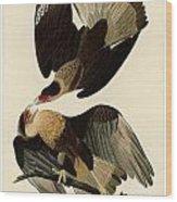 Brasilian Caracara Eagle Wood Print