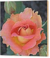 Brass Band Rose Wood Print